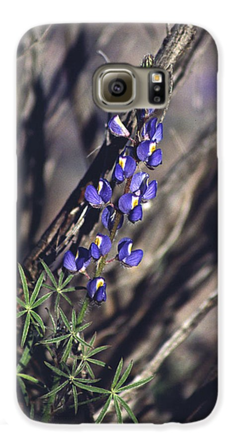 Flower Galaxy S6 Case featuring the photograph Lonely Lupine by Randy Oberg