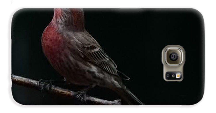 Finch Galaxy S6 Case featuring the photograph Looking Towards Heaven by Gaby Swanson