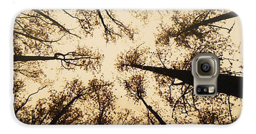 Trees Galaxy S6 Case featuring the photograph Looking Up by Jack Paolini