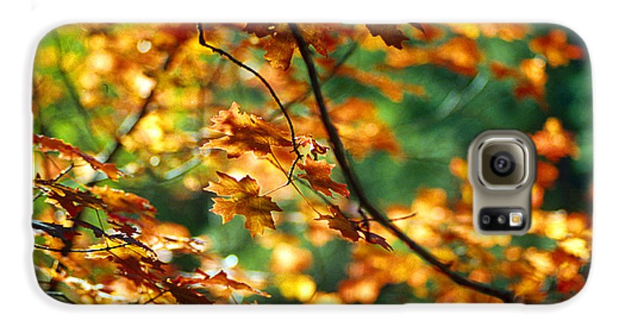 Fall Color Galaxy S6 Case featuring the photograph Lost In Leaves by Kathy McClure