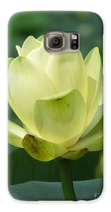 Lotus Galaxy S6 Case featuring the photograph Lotus by Amanda Barcon