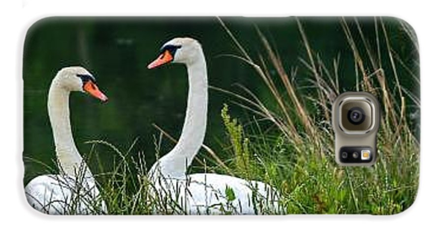 Clay Galaxy S6 Case featuring the photograph Loving Swans by Clayton Bruster