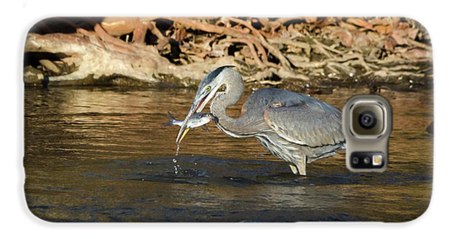 Heron Galaxy S6 Case featuring the photograph Lunch On The Neuse River by George Randy Bass