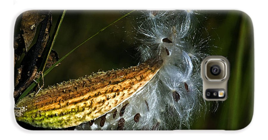 Autumn Galaxy S6 Case featuring the photograph Milkweed Pod by Al Mueller