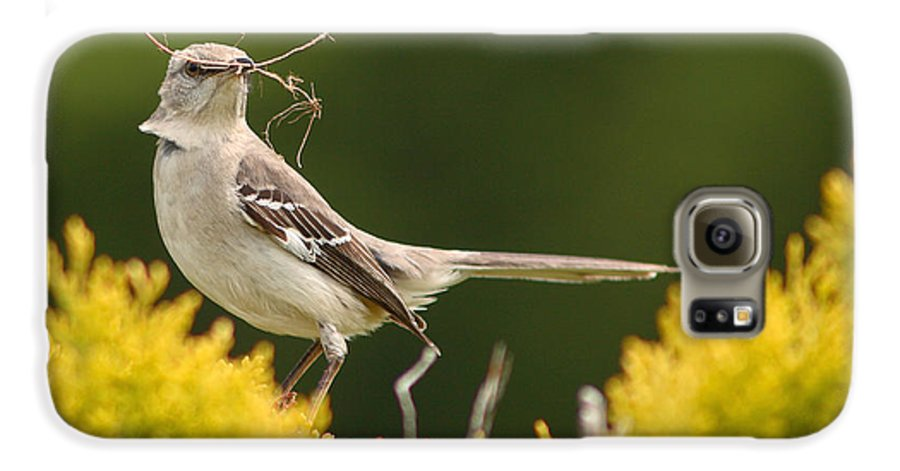 Mockingbird Galaxy S6 Case featuring the photograph Mockingbird Perched With Nesting Material by Max Allen
