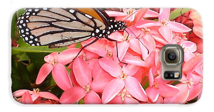 Butterfly Galaxy S6 Case featuring the photograph Monarch On Huneysuckle by Chandelle Hazen