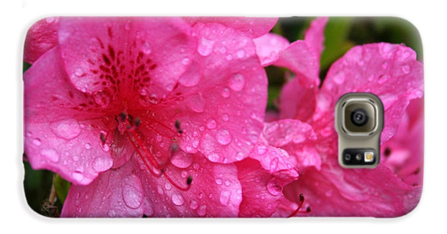 Azaleas Galaxy S6 Case featuring the photograph Morning Dew by Mary Gaines