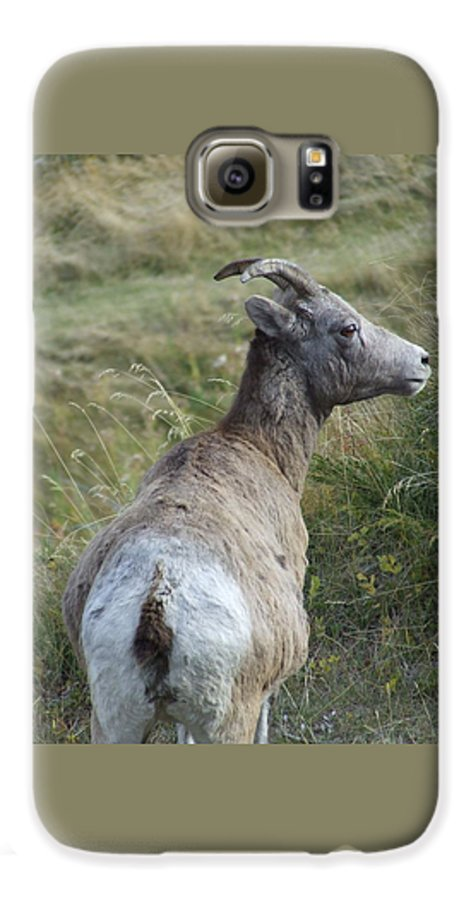 Bighorn Sheep Galaxy S6 Case featuring the photograph Mother Bighorn by Tiffany Vest