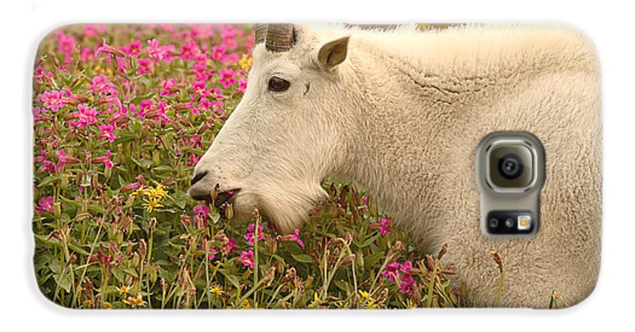 Mountain Goat Galaxy S6 Case featuring the photograph Mountain Goat In Colorful Field Of Flowers by Max Allen