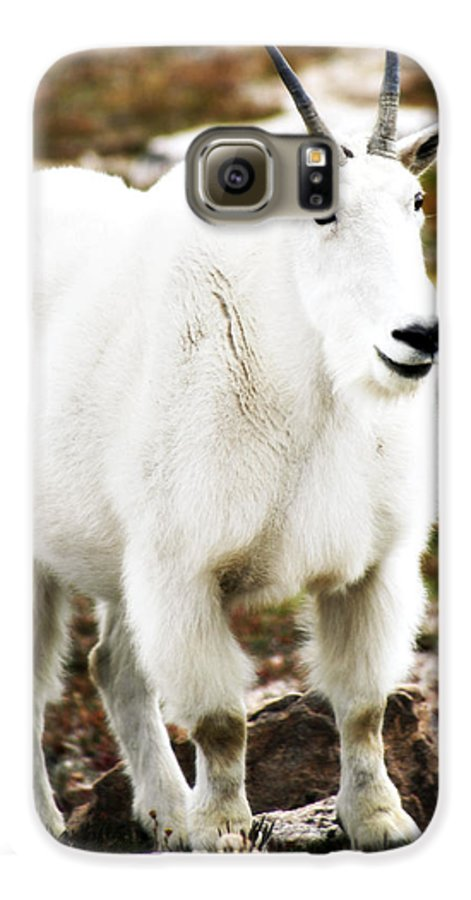 Animal Galaxy S6 Case featuring the photograph Mountain Goat by Marilyn Hunt