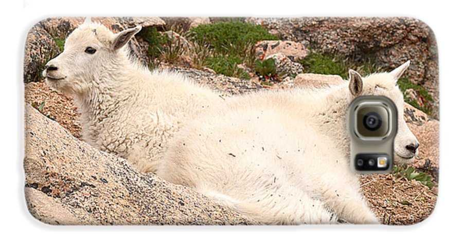Mountain Goat Galaxy S6 Case featuring the photograph Mountain Goat Twins by Max Allen