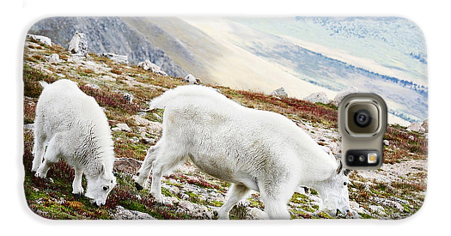 Mountain Galaxy S6 Case featuring the photograph Mountain Goats 1 by Marilyn Hunt