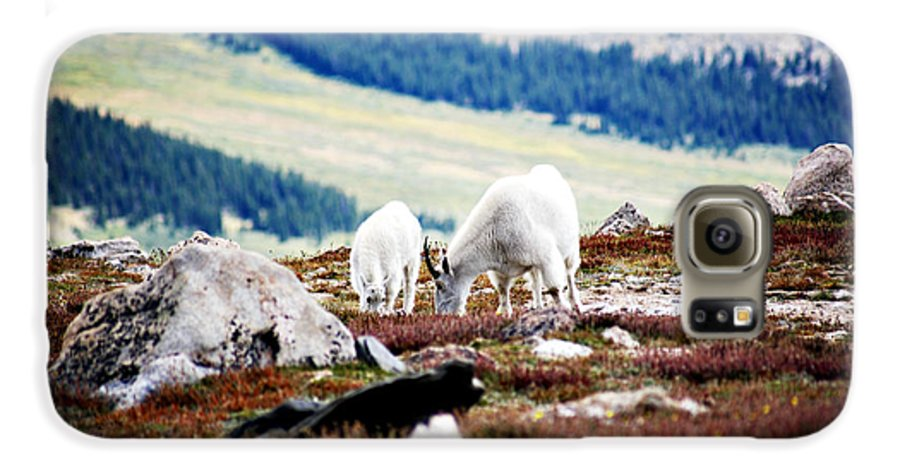 Animal Galaxy S6 Case featuring the photograph Mountain Goats 2 by Marilyn Hunt