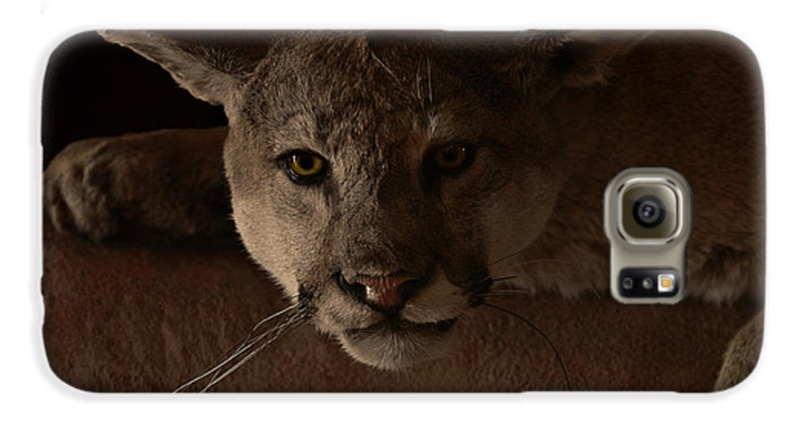 Cougar Galaxy S6 Case featuring the photograph Mountain Lion A Large Graceful Cat by Christine Till