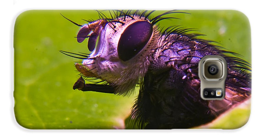 Fly Galaxy S6 Case featuring the photograph Mr. Fly by Douglas Barnett