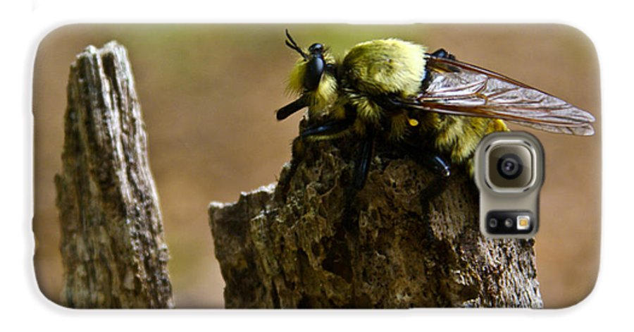 Fly Galaxy S6 Case featuring the photograph Mrs. Fly by Douglas Barnett