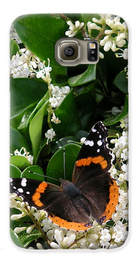 Nature Galaxy S6 Case featuring the photograph Nature In The Wild - A Sweet Stop by Lucyna A M Green