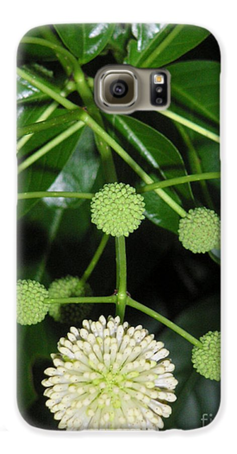 Nature Galaxy S6 Case featuring the photograph Nature In The Wild - Natural Pom Poms by Lucyna A M Green