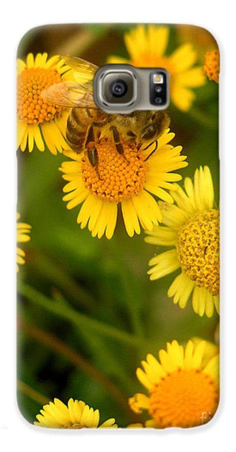 Nature Galaxy S6 Case featuring the photograph Nature In The Wild - The Nectar Company by Lucyna A M Green