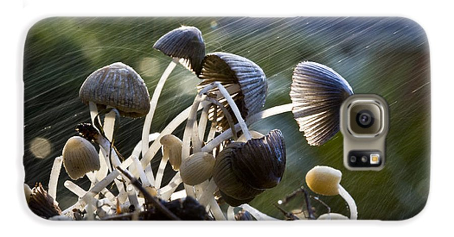 Mushrooms Rain Showers Umbrellas Nature Fungi Galaxy S6 Case featuring the photograph Nature by Sheila Smart Fine Art Photography