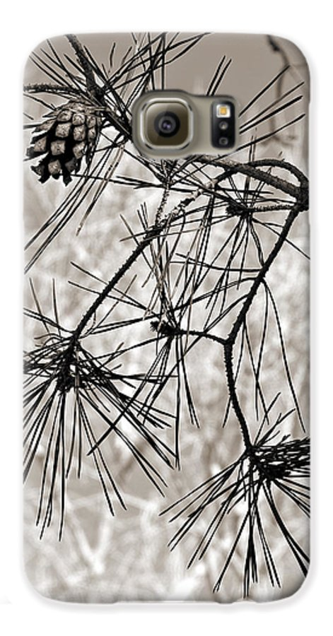 Tree Galaxy S6 Case featuring the photograph Needles Everywhere by Marilyn Hunt