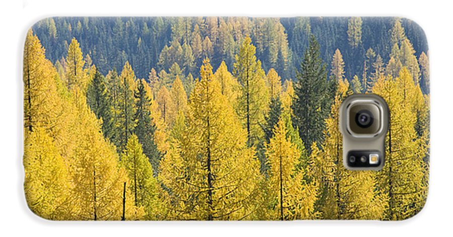 Trees Galaxy S6 Case featuring the photograph North Idaho Gold by Idaho Scenic Images Linda Lantzy
