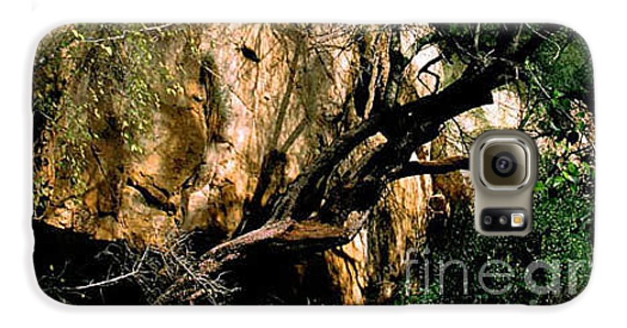 Trees Galaxy S6 Case featuring the photograph Old Tree by Kathy McClure