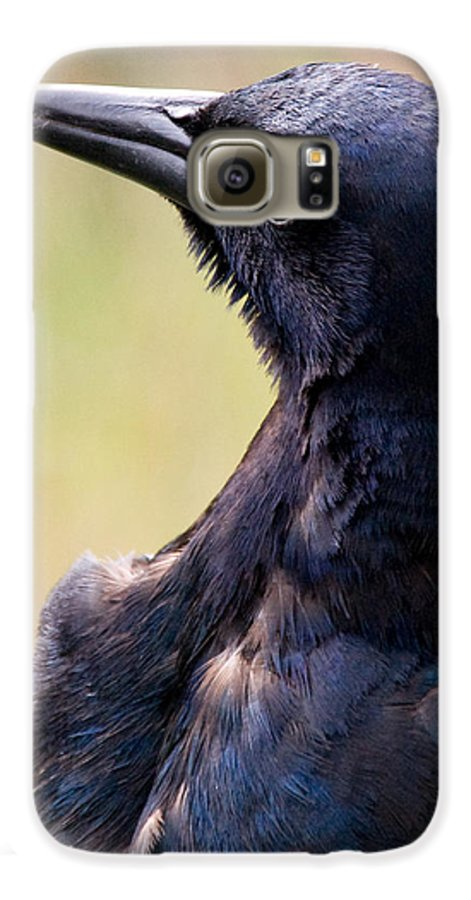 Bird Galaxy S6 Case featuring the photograph On Alert by Christopher Holmes