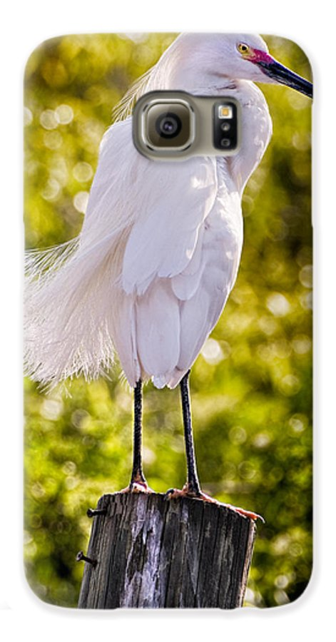 snowy Egret Galaxy S6 Case featuring the photograph On Watch by Christopher Holmes