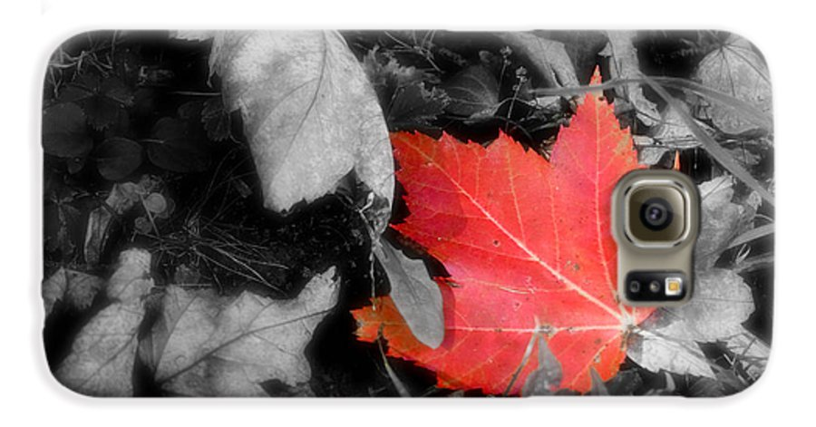 Leaf Galaxy S6 Case featuring the photograph One Of A Kind by Kenneth Krolikowski