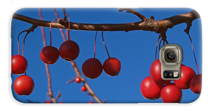 Autumn Galaxy S6 Case featuring the photograph Ornamental Crabapple Branch by Anna Lisa Yoder