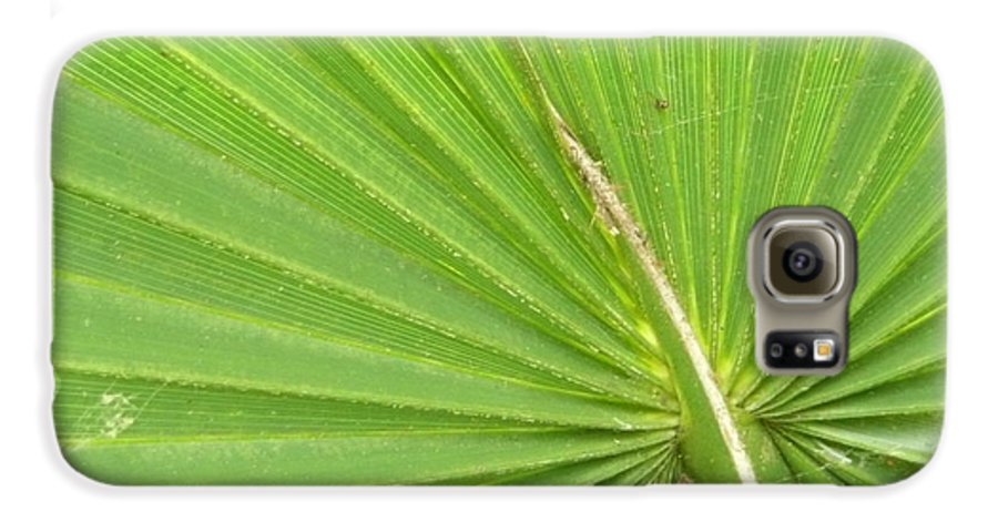Palmetto Galaxy S6 Case featuring the photograph Palmetto II by Kathy Schumann