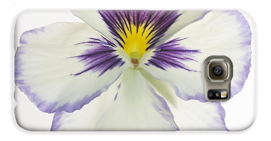Pansy Genus Viola Galaxy S6 Case featuring the photograph Pansy 2 by Tony Cordoza