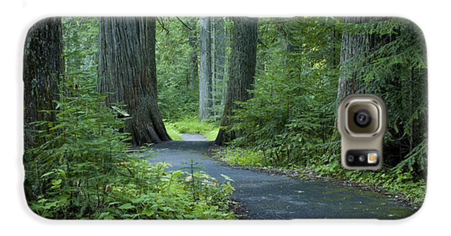 Grove Galaxy S6 Case featuring the photograph Path Through The Cedars by Idaho Scenic Images Linda Lantzy