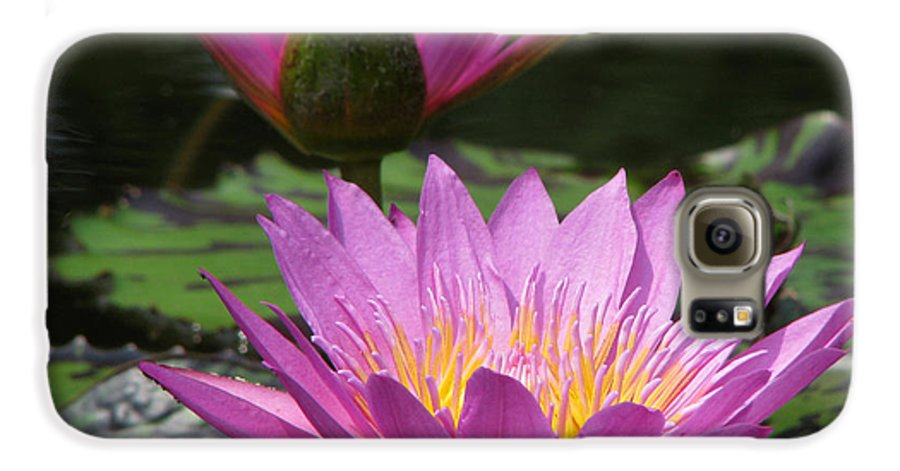 Lillypad Galaxy S6 Case featuring the photograph Peaceful by Amanda Barcon