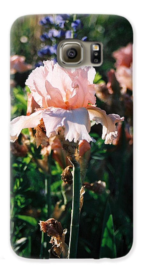 Flower Galaxy S6 Case featuring the photograph Peach Iris by Steve Karol