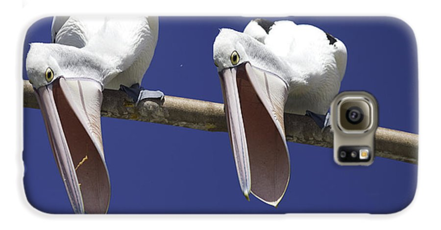 Pelican Galaxy S6 Case featuring the photograph Pelican Burp by Sheila Smart Fine Art Photography