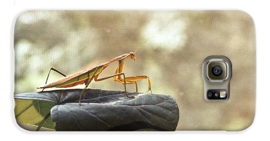 Praying Galaxy S6 Case featuring the photograph Pensive Mantis by Douglas Barnett