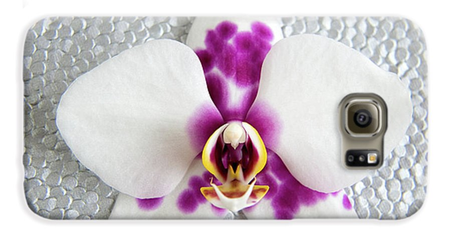 Nature Galaxy S6 Case featuring the photograph Phalaenopsis Yu Pin Panda by Julia Hiebaum