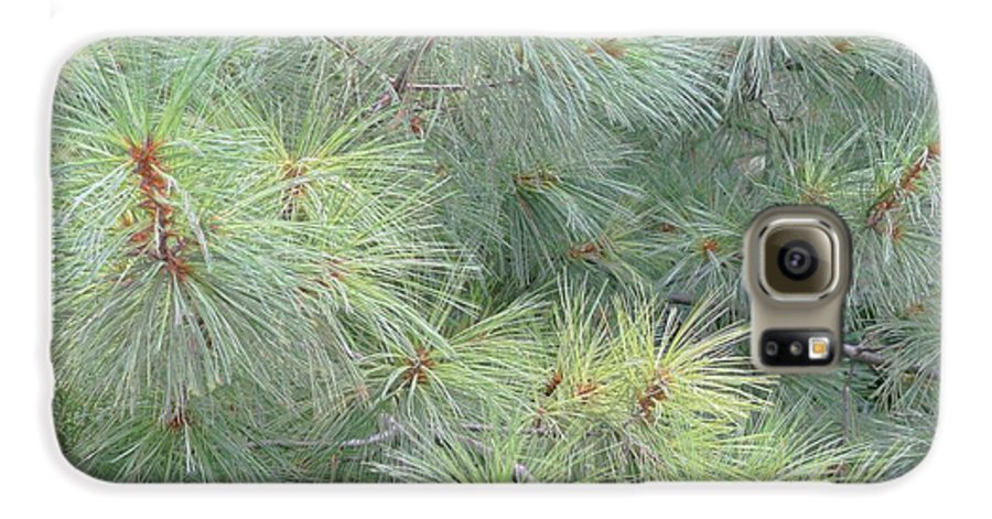 Pines Galaxy S6 Case featuring the photograph Pines by Rhonda Barrett