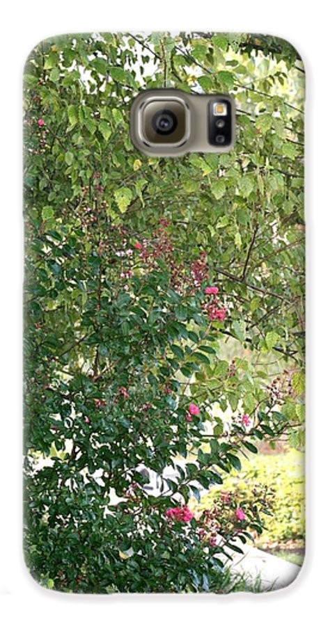 Path Galaxy S6 Case featuring the photograph Pink And Green Path by Nadine Rippelmeyer