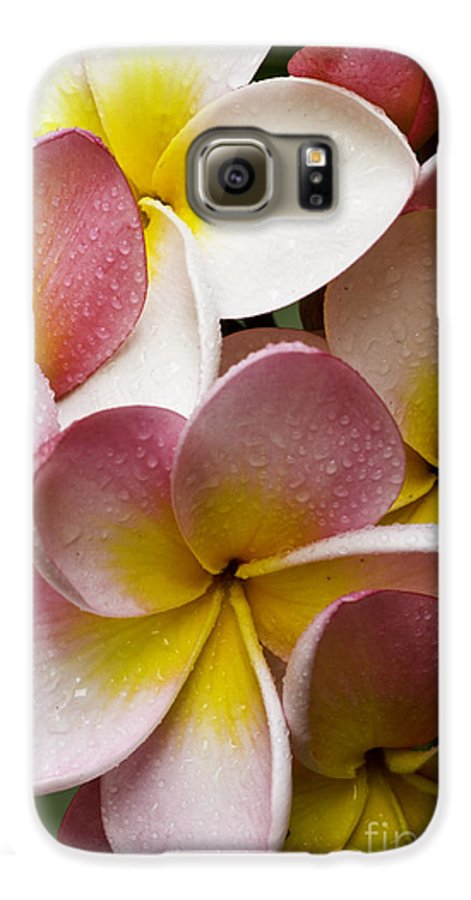 Pink Frangipani Galaxy S6 Case featuring the photograph Pink Frangipani by Sheila Smart Fine Art Photography
