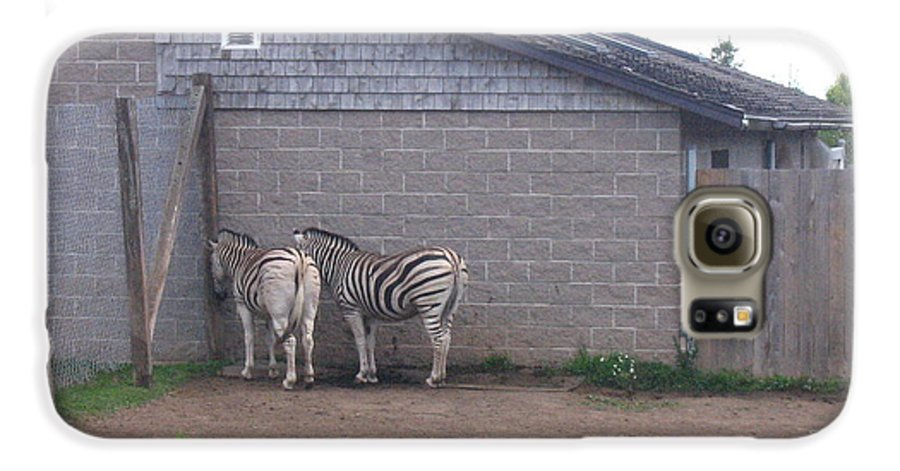 Zebra Galaxy S6 Case featuring the photograph Plains Zebras In The Corner by Melissa Parks