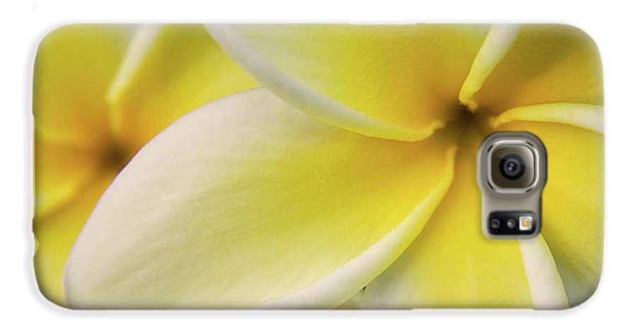 Nature Galaxy S6 Case featuring the photograph Plumeria Flowers by Julia Hiebaum