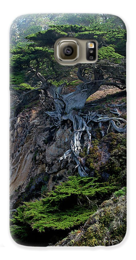 Landscape Galaxy S6 Case featuring the photograph Point Lobos Veteran Cypress Tree by Charlene Mitchell