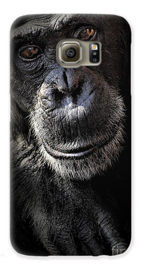 Chimp Galaxy S6 Case featuring the photograph Portrait Of A Chimpanzee by Sheila Smart Fine Art Photography