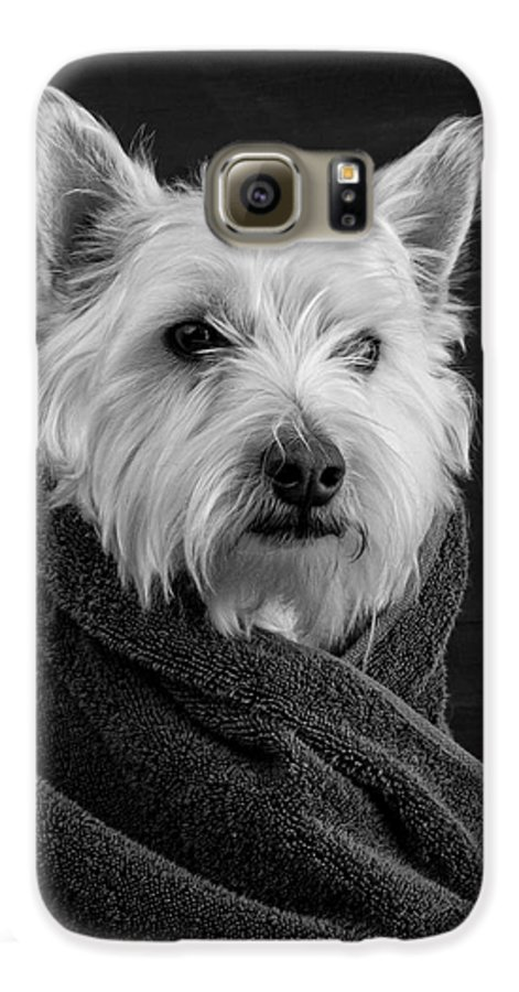 Portrait Of A Westie Dog Galaxy S6 Case featuring the photograph Portrait Of A Westie Dog by Edward Fielding