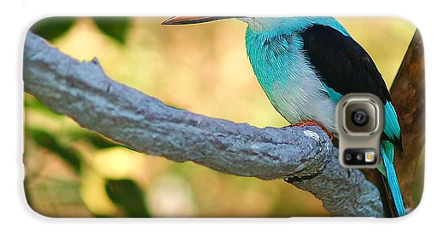Kingfisher Galaxy S6 Case featuring the photograph Pretty Bird by Gaby Swanson