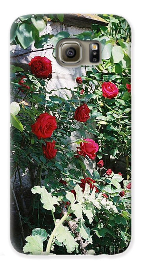 Floral Galaxy S6 Case featuring the photograph Provence Red Roses by Nadine Rippelmeyer