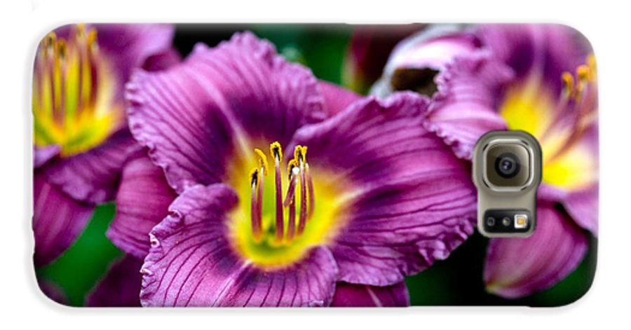 Flower Galaxy S6 Case featuring the photograph Purple Day Lillies by Marilyn Hunt